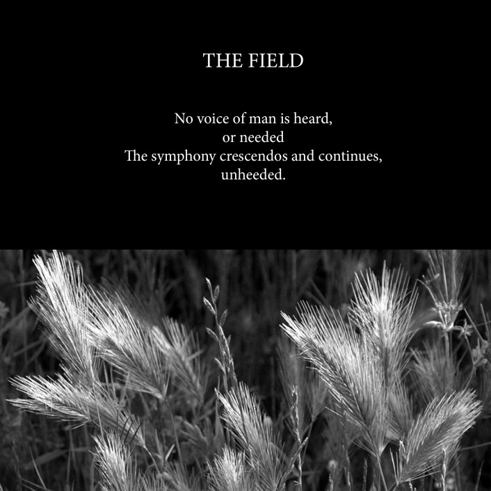 The Field-Cover